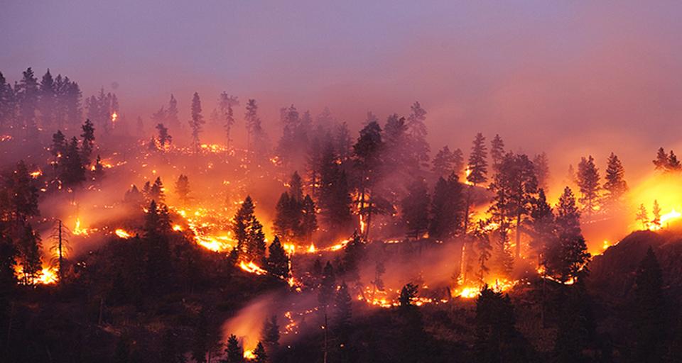 艾睿光电红外热成像仪应用于森林防火